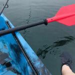 ルアーで魚は釣れる?