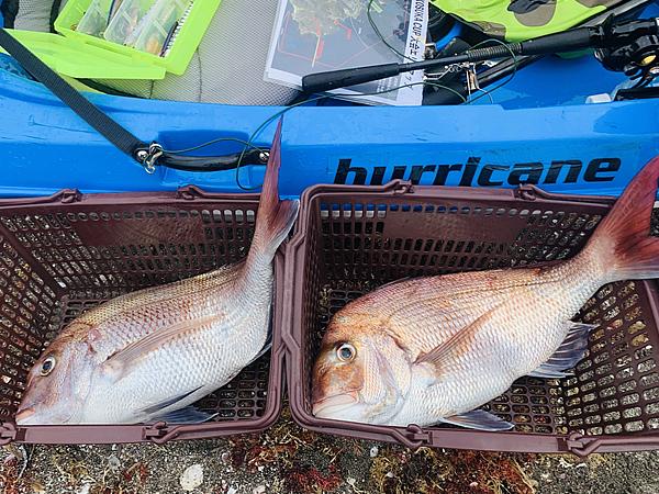 2匹の大きな真鯛を横須賀沖で釣った参加者さん
