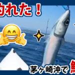 初めての茅ヶ崎沖でサバが釣れた!